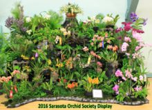 January 2016 Show – Sarasota Orchid Society Display