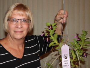 Best Specoes-Susan Gerhardt-Tricholglottis brachiata 'Philippines' -