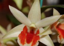 Best Hybrid-Jack Knuese, Den. Green Lantern 'Red Carpet' (2)