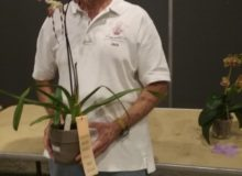 Best Hybrid, Paph. Stoned Bernice, Jack Knuese - Copy