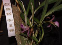 Best Novice Brass. Hybrid Amy Boyd 2 Copy