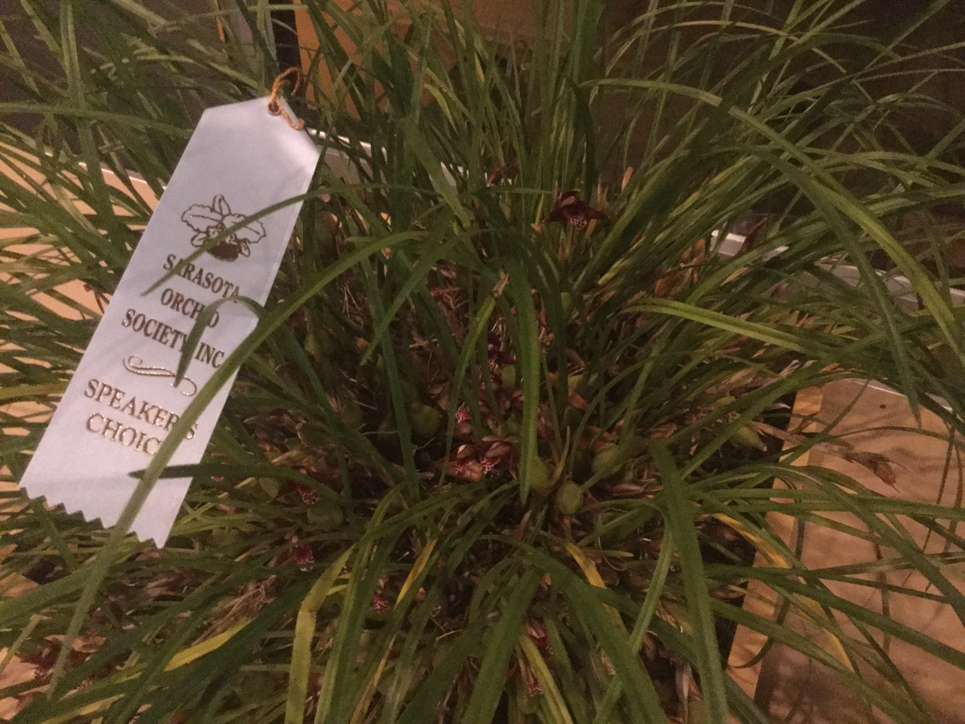 Speaker's Choice-Jack Knuese-Max. tenuifolia