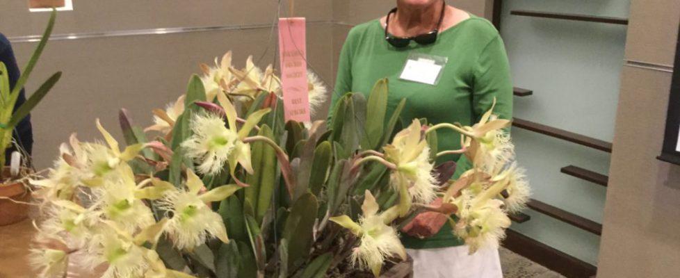 June 2019 Best Species Award - Patti Quinnelly - Brassavola digbyana